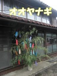 Ooyanagi